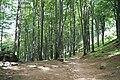 Rezerwat - panoramio (2).jpg