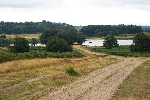 Richmond Park - geograph.org.uk - 2026163