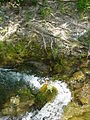 River, Roots and Soil - Krka National Park - Croatia.jpg