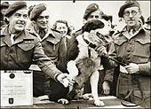 Собака получает медаль в окружении нескольких мужчин в военной форме.