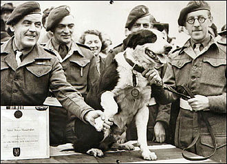 Dickin Medal - Rob the Collie, receiving his medal