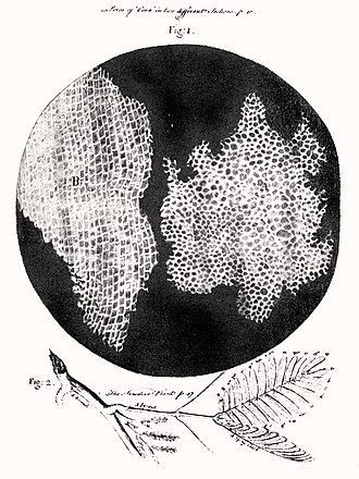 Scientific theory - The first observation of cells, by Robert Hooke, using an early microscope. This led to the development of cell theory.