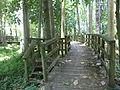 Robert Simpson Nature Trail 03.JPG