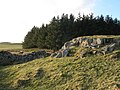Rock outcrop southeast of Carrawbrough - geograph.org.uk - 1260666.jpg