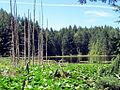 Roe Lake (7799163834).jpg