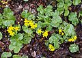 Romania - flowers.jpg