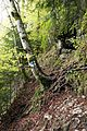 Romania - trail in forest 4.jpg