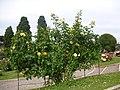 Roseto-di-roma-capitale---sito-di--il-cimitero-ebraico--dal-1645-fino-al-1934 9005796993 o 40.jpg