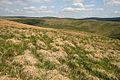 Rough grazing near Sharpy Law - geograph.org.uk - 826079.jpg