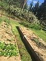 Rural garden in orange nsw Australia.jpg