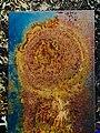 Rusty Bench (29295926076).jpg