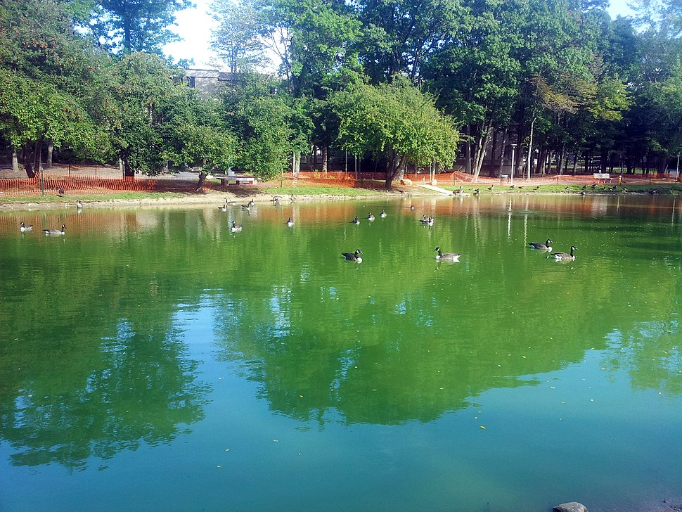 SBU Roth Pond