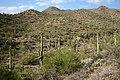 Saguaro cactus forest.jpg