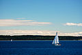 Sailboats near Sidney BC.jpg