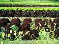 Salate - panoramio (4).jpg