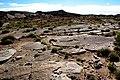 San Rafael cactus (Pediocactus despainii) - habitat (6803598419).jpg