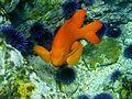 Sanc0055 - Flickr - NOAA Photo Library.jpg