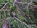Sandoval , Tambopata - panoramio (5).jpg