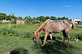 Scenes of Cuba (K5 01929) (5974197652).jpg