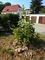 Schlängelbachweg, Pirna 122421060.jpg