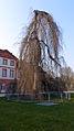 Schloss Biebrich in Wiesbaden 31.JPG