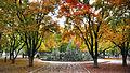 Sdu baotuquan campus yang yunlei 2.jpg