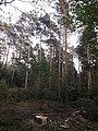 Segeberger Forst 04.jpg