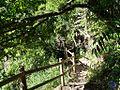 Sendero en Los Tilos 2 - panoramio.jpg