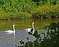 Seney National Wildlife Refuge - Wildlife (9702137153).jpg