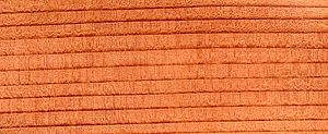 The wood of Coast Redwood is distinctively red in colour