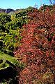 Shatili Autumn colors (8044093521).jpg