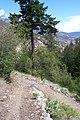Skihist Provincial Park (157709431).jpg