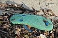 Slippers on the beach of Bantayan 22.jpg