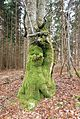 Slovenia - Moss on tree 2.jpg