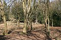 Small wooded area, Mayford - geograph.org.uk - 1778607.jpg