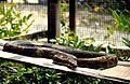 Snake 001.jpg