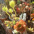 So many happy succulent plant life's!!! Back to school qigong class (by j bizzie) 2014-07-07.jpg