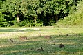 Some 15 rabbits in the eveningsun at Park Hoge Erf Schaarsbergen. From the childs sometimes you can only see the ears - panoramio.jpg