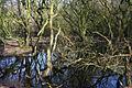 Sound Heath pond.jpg