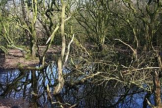Sound Heath - One of many small woodland ponds