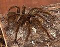 Spider81.jpg