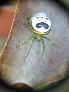 240px spider 4