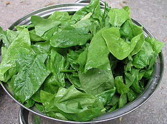 Leaf vegetable - Spinach leaves in a colander