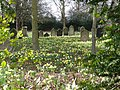 Spring flowers, St James' Churchyard, Mere Green - geograph.org.uk - 823563.jpg