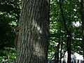Squirrel climbing a tree at the Genevieve Green Gardens at the Ewing Cultural Center.jpg