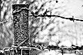 Stacheldrahtzaun - Grenze.jpg