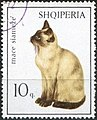 Stamp of Albania - 1966 - Colnect 197255 - Siamese Cat Felis silvestris catus.jpeg