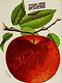 Stark fruits (1896) (20518683386).jpg