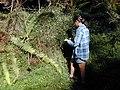 Starr-020221-0047-Erigeron karvinskianus-habit with Kim-Polipoli-Maui (24438324512).jpg
