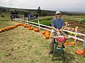 Starr-111004-0592-Cucurbita pepo-display with Kim riding bull-Kula Country Farms-Maui (24822777600).jpg